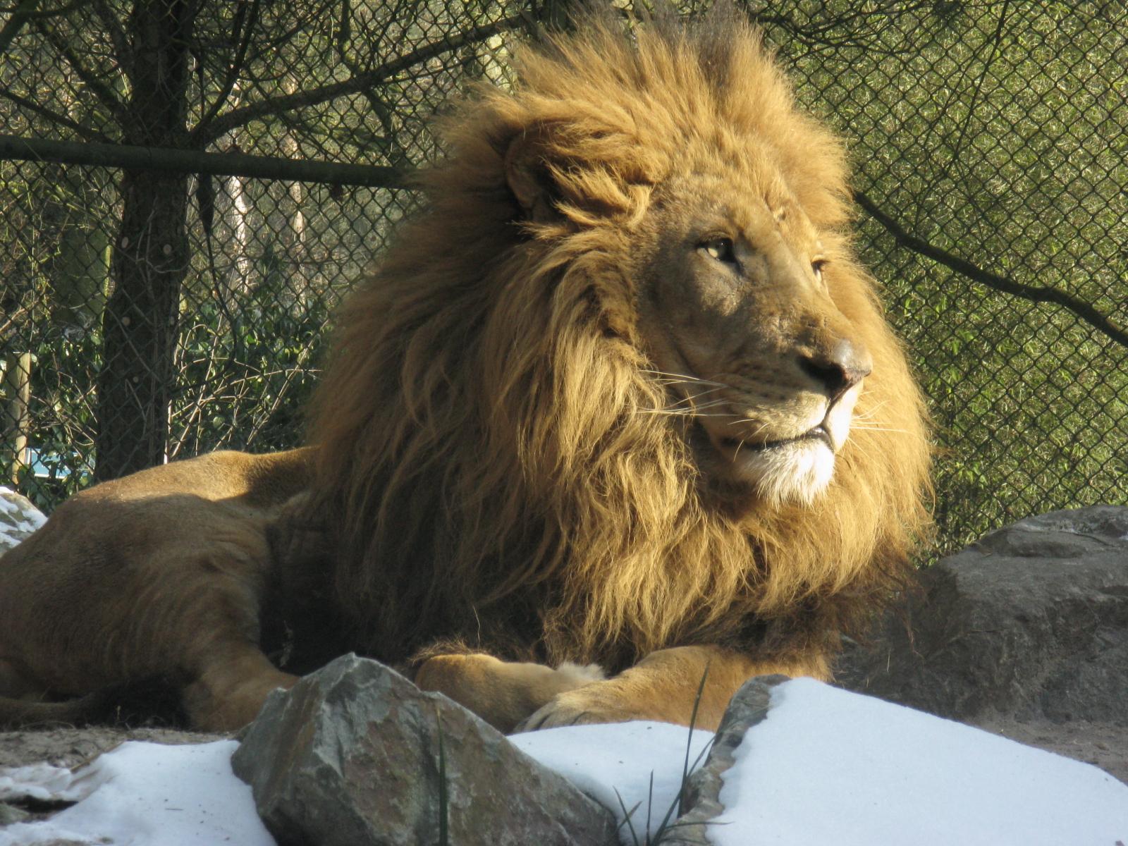 man-lion