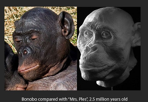 nature vs nurture future proof bonobo evolution